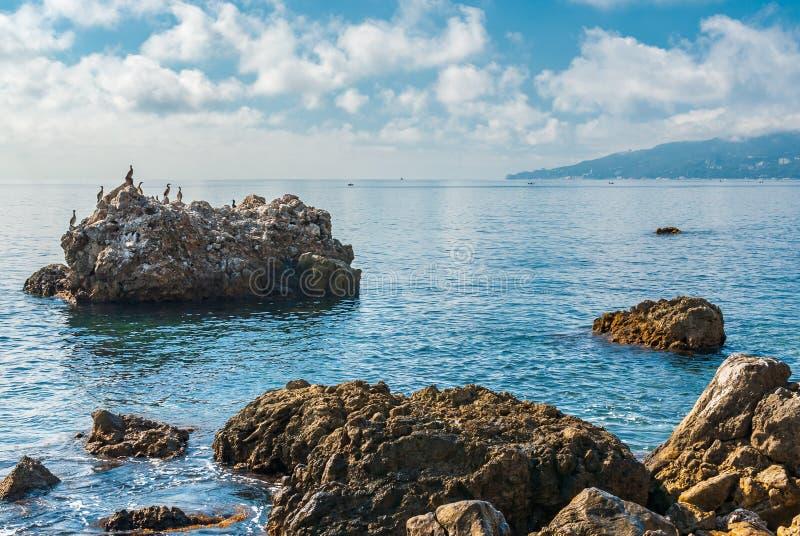 黑海狂放水scape与小组鸬鹚 免版税图库摄影