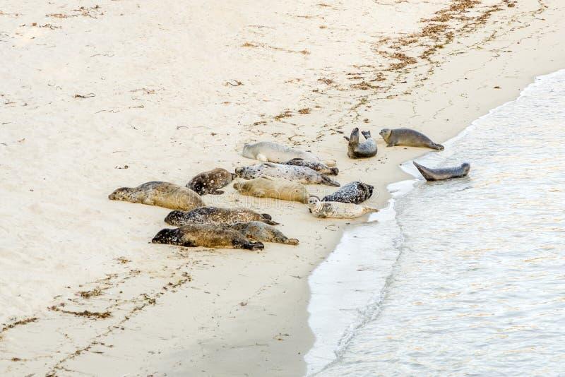 海狮在沙滩上休息 免版税图库摄影