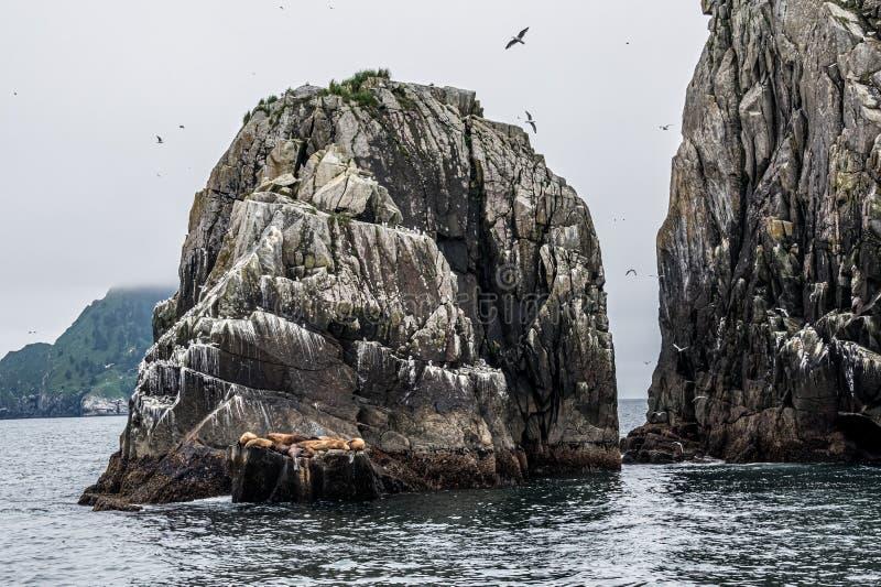 海狮海岛休息 库存图片