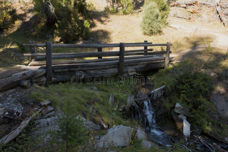 海狸筑成池塘足迹横穿铁线莲属小河,马默斯斯普林斯,黄石国家公园 库存图片