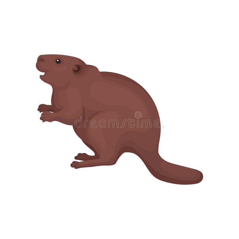 海狸,野生在白色背景的森林啮齿目动物动物传染媒介例证 向量例证