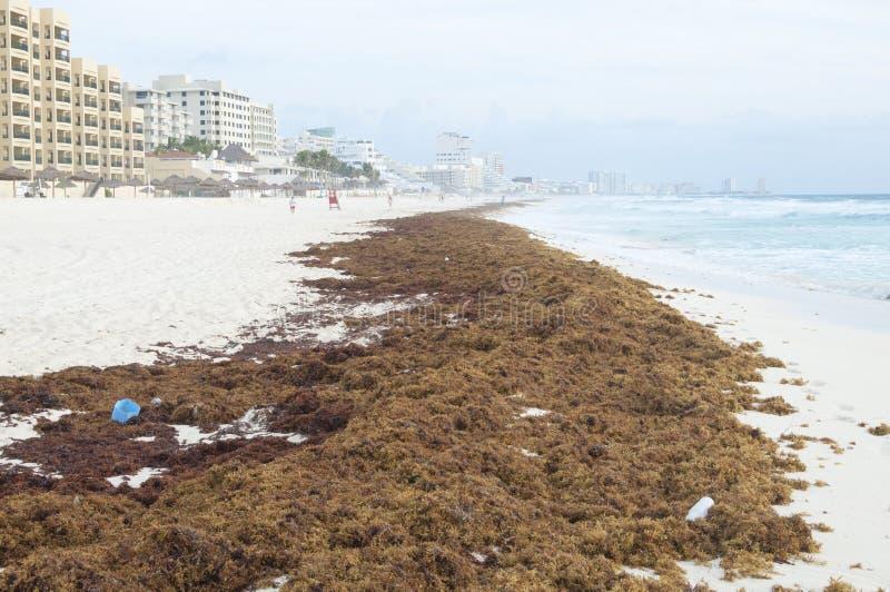从海的废弃物 库存图片