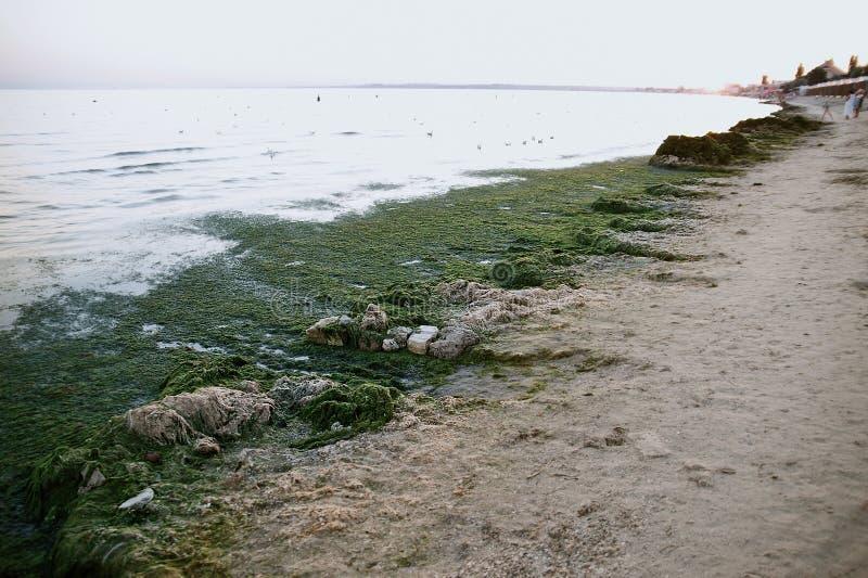 海的污染有塑料袋的 生态问题 海草的肮脏的海 海是开花的 库存图片