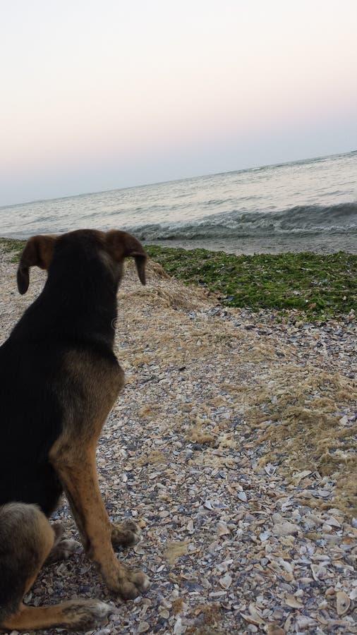 海的狗 免版税图库摄影