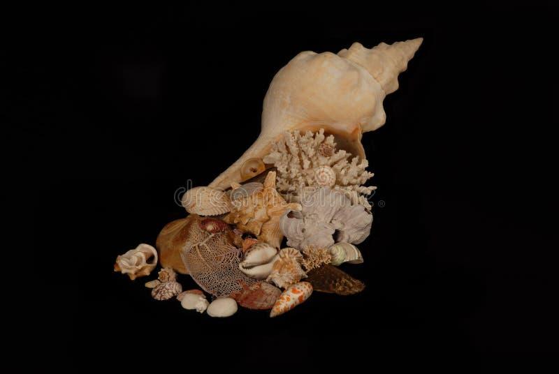 海的聚宝盆 库存照片