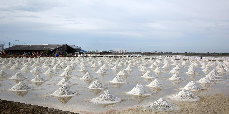 海盐在盐农场 库存图片