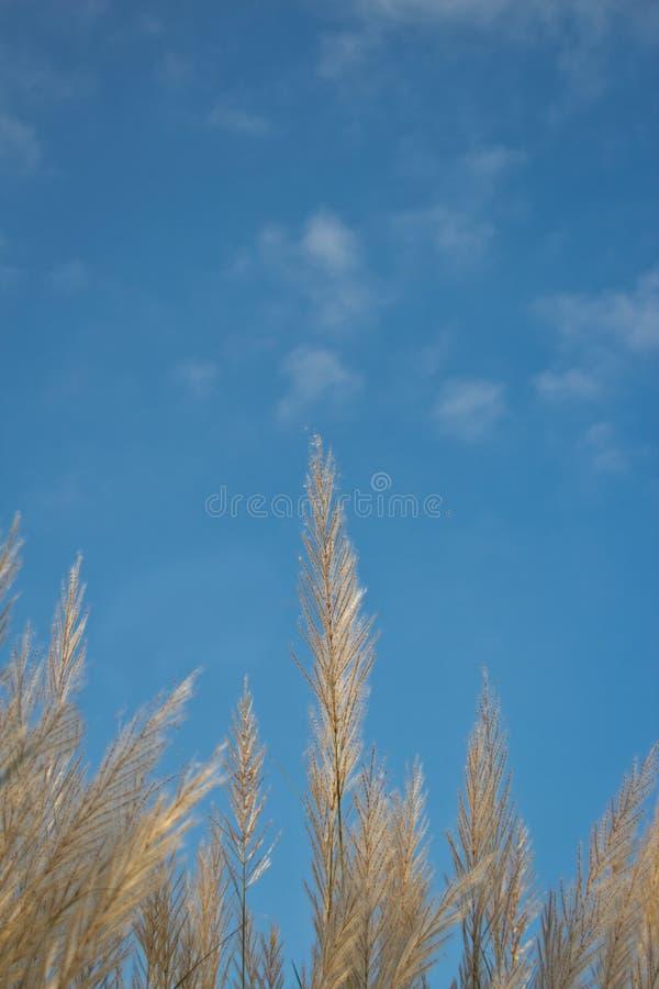 海草和天空 库存照片