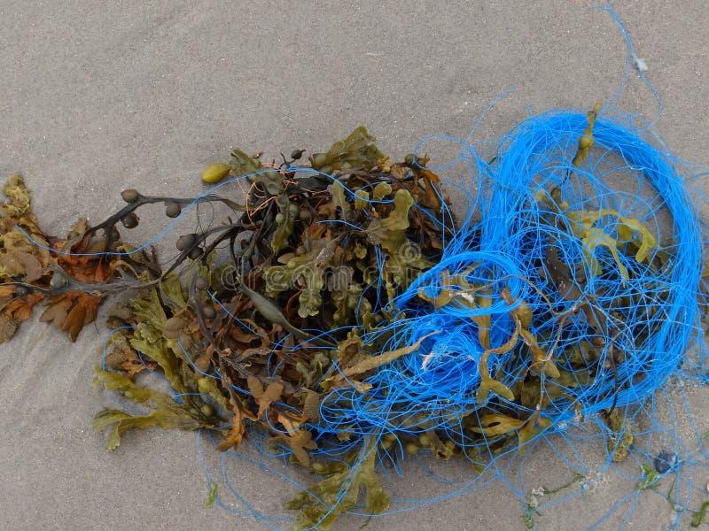海草和蓝色绳索 库存照片