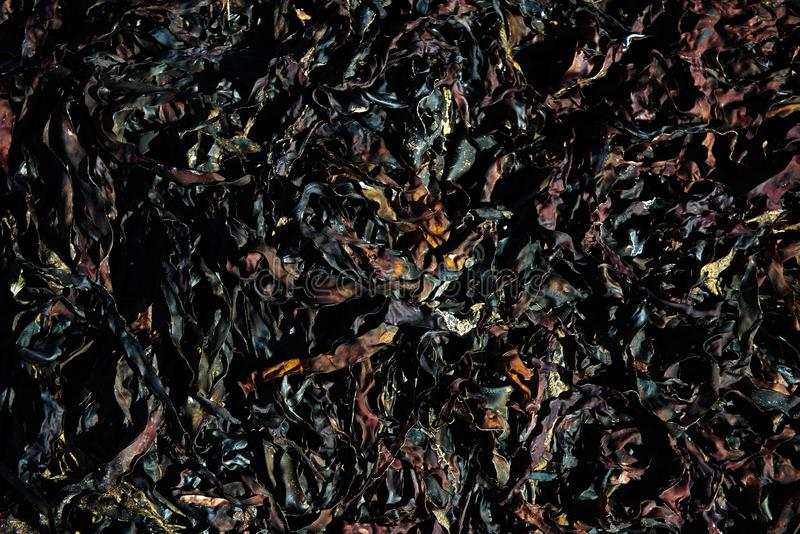 海草海藻变褐织地不很细制模好的线和自然样式 库存照片