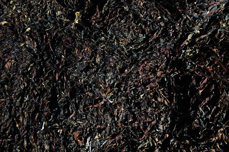 海草海藻变褐织地不很细制模好的线和自然样式 库存图片