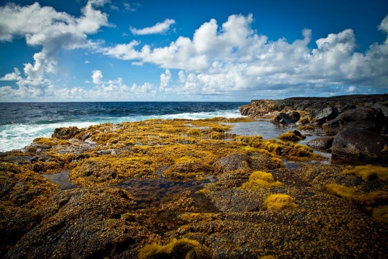 海草盖了熔岩岩石在离夏威夷的附近海岸  库存图片
