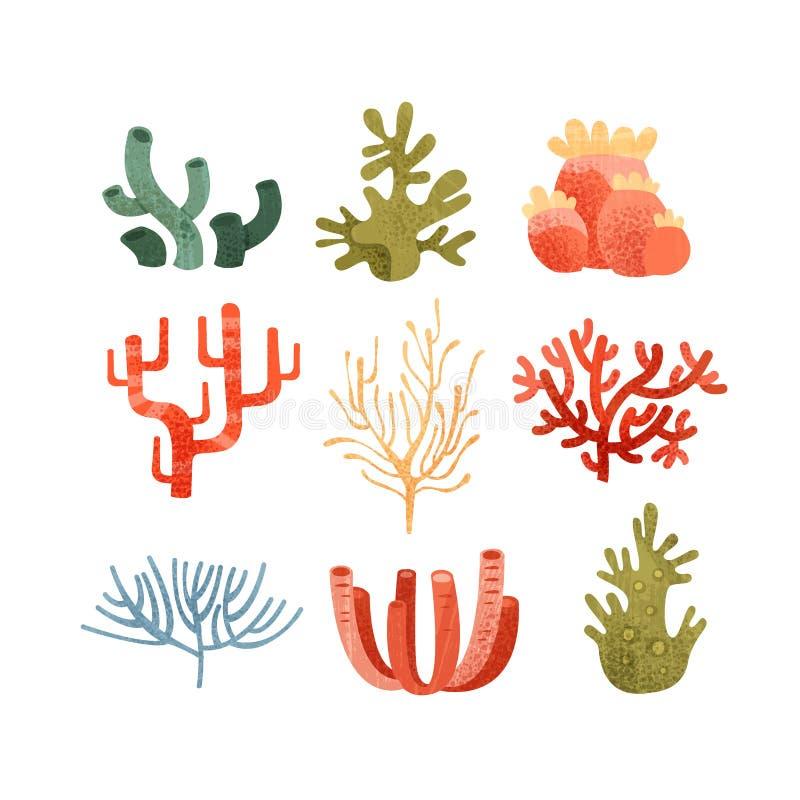 海草集合,五颜六色的水下的海洋植物导航在白色背景的例证 向量例证