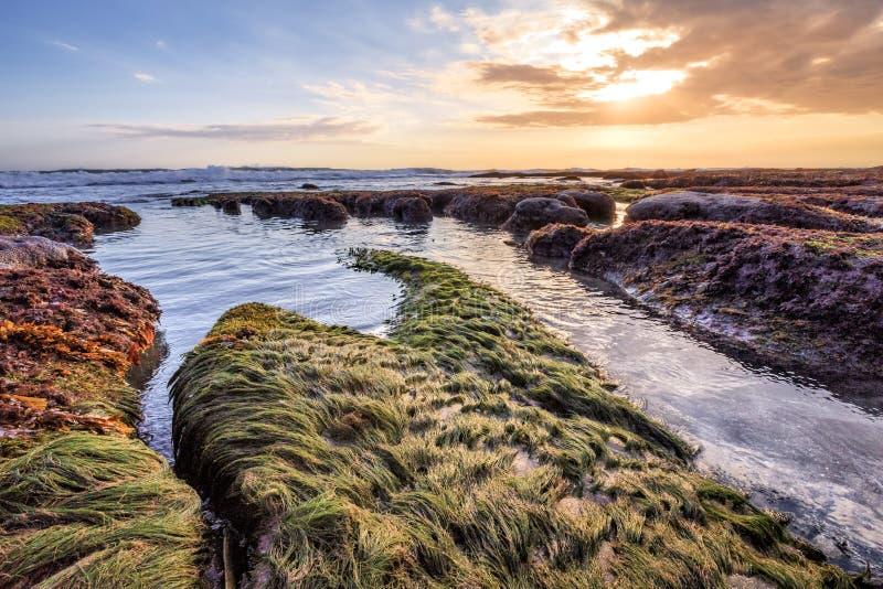 海草风景海岸线在巴厘岛印度尼西亚 免版税库存照片