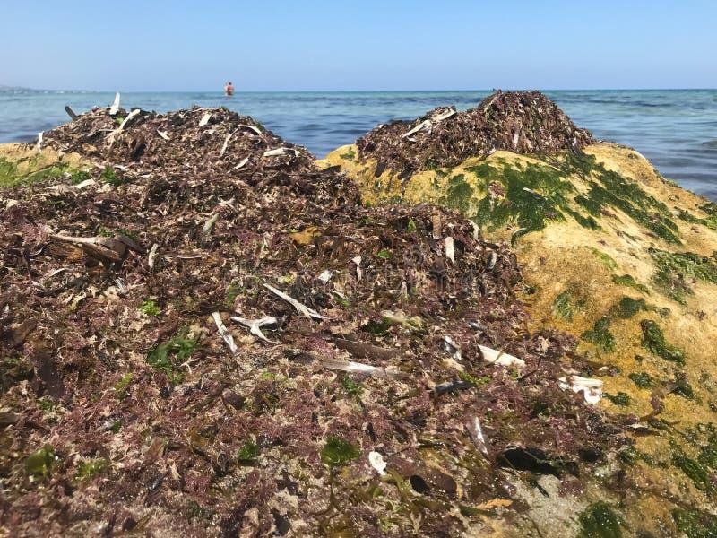海藻和岩石在江边 图库摄影