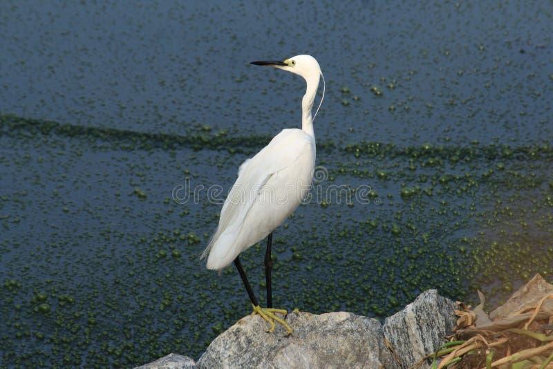 海藻和鸟 库存图片