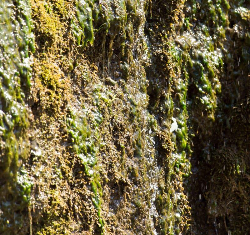 海藻在春天 免版税库存照片