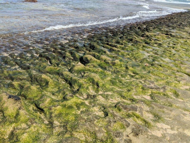 海藻盖了沿Wainiha海湾公园海滩岸的岩石  免版税库存照片