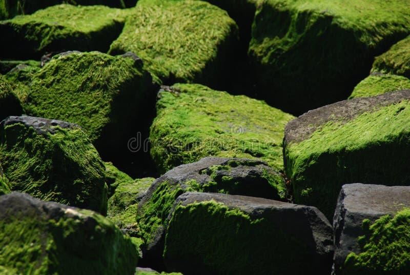 海藻石头 库存图片