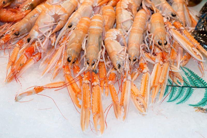 海螯虾norvegicus 免版税图库摄影