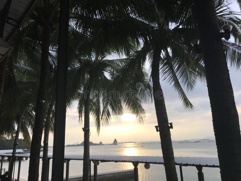 海视图和可可椰子树 库存照片