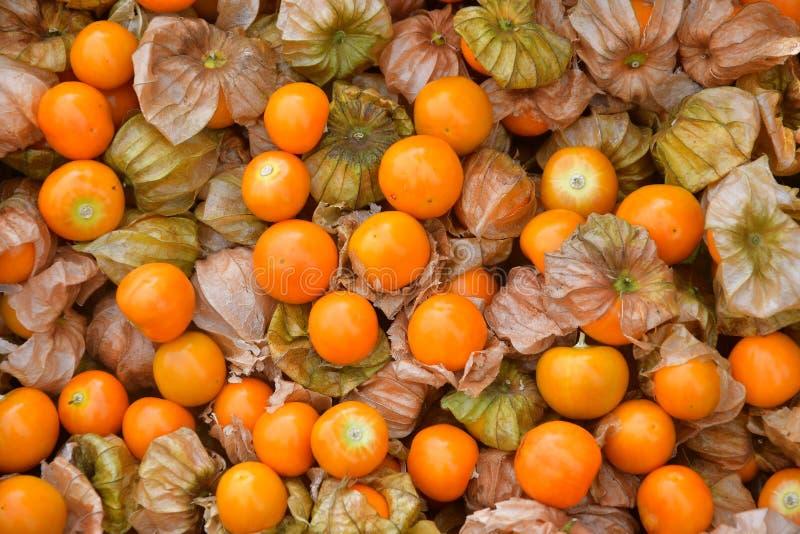 海角新鲜的鹅莓 库存图片