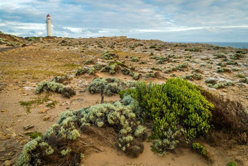 海角纳尔逊接近波特兰的国家公园在澳大利亚 库存图片