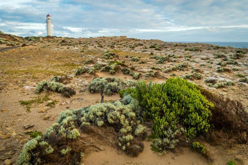 海角纳尔逊接近波特兰的国家公园在澳大利亚 免版税图库摄影