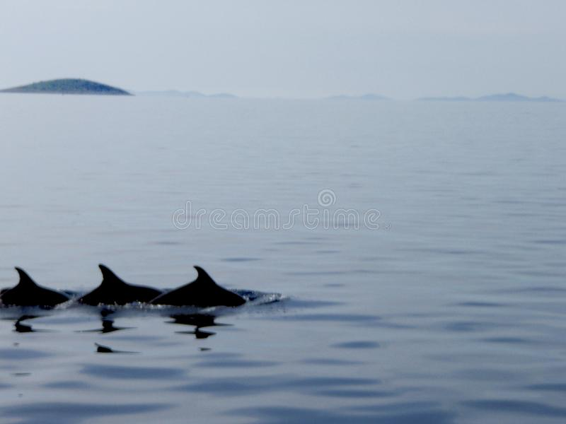 海豚三 库存图片