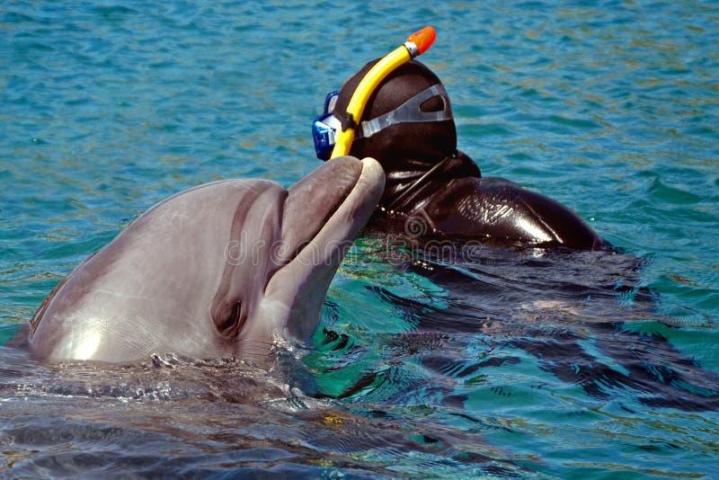 海豚从水涌现了 潜航和游泳与在海或水池的海豚 库存照片