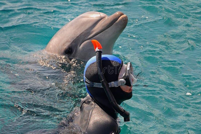 海豚和潜水者有面具的从水涌现了 佩戴水肺的潜水,游泳与海豚,潜航在海或水池 库存照片