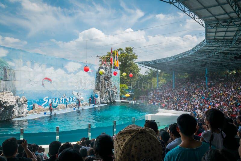 海豚在徒步旅行队世界,泰国显示阶段 库存图片