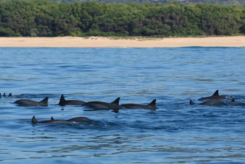 海豚当事人 免版税库存照片