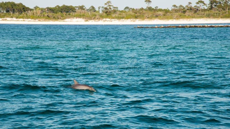 海豚游泳乘小船 免版税图库摄影