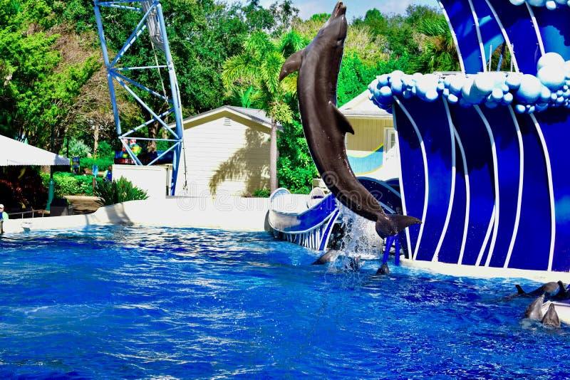 海豚的一个大的飞跃 库存图片