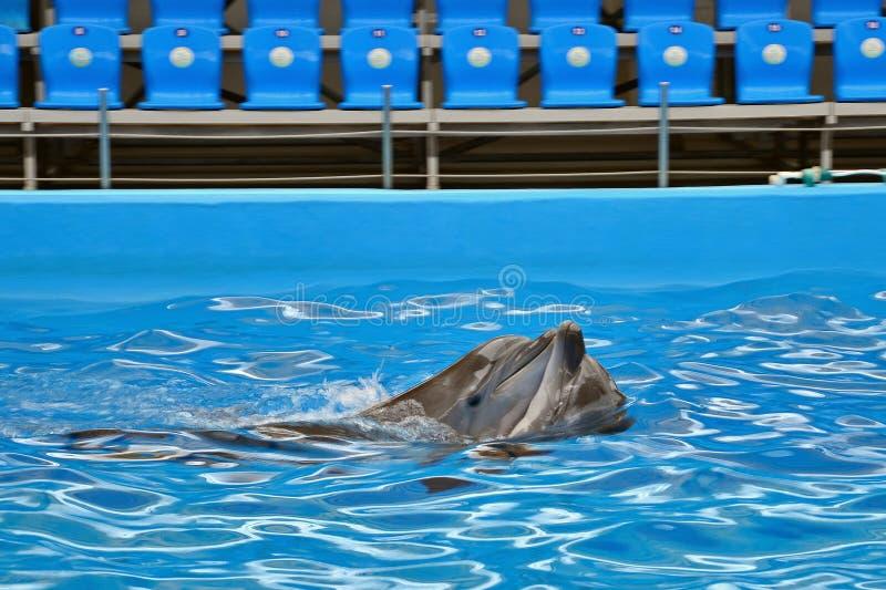 海豚的感觉 免版税库存照片