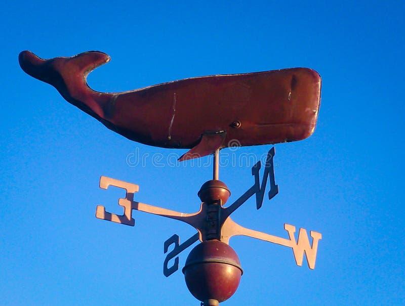 海豚航海指南针 库存照片