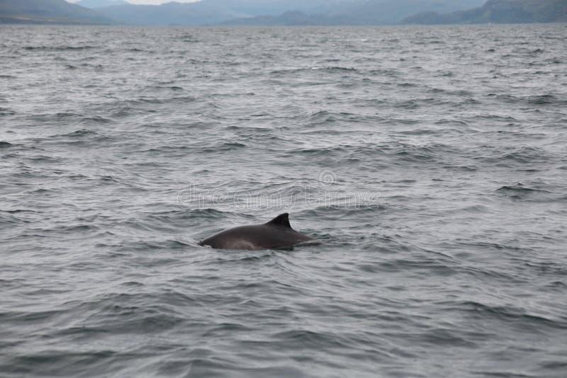 海豚观看 库存照片