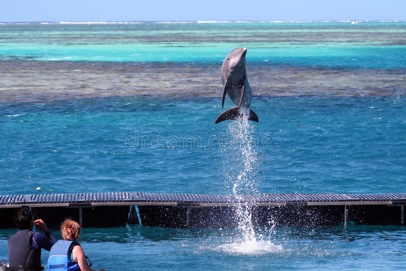 海豚跳的命令 库存照片