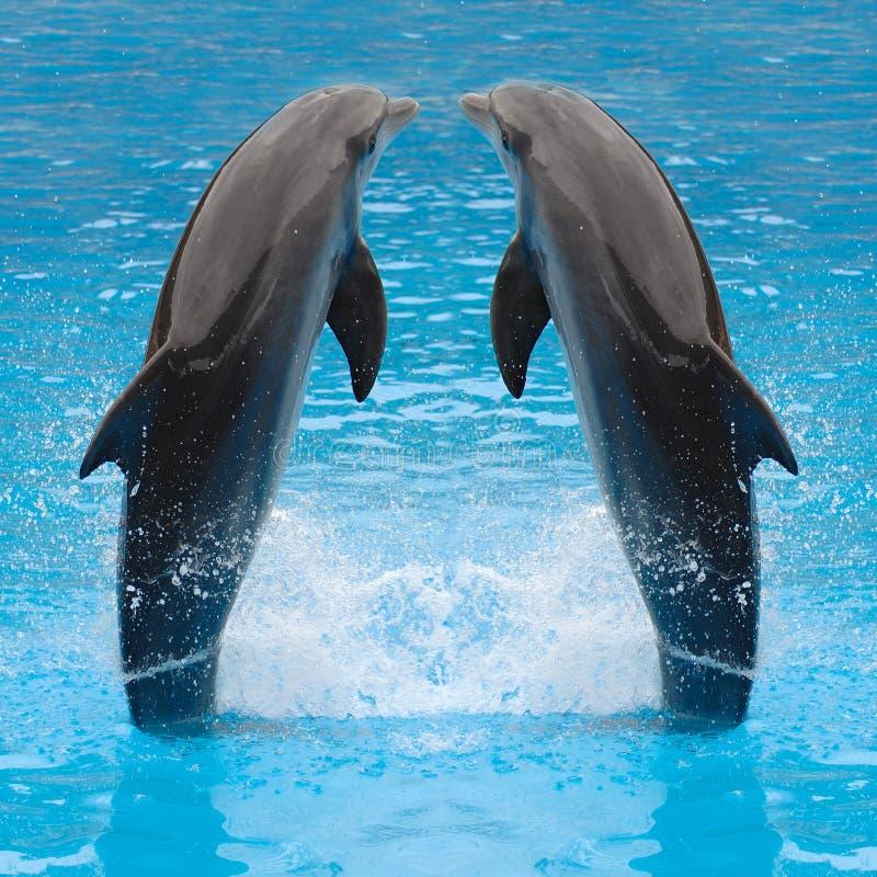 海豚跳的孪生 库存照片