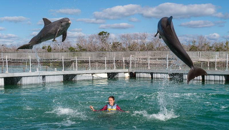 海豚跳 与海豚的妇女游泳在大海 免版税库存照片