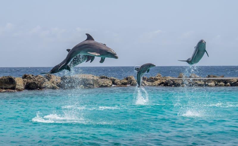 海豚跳 免版税库存图片