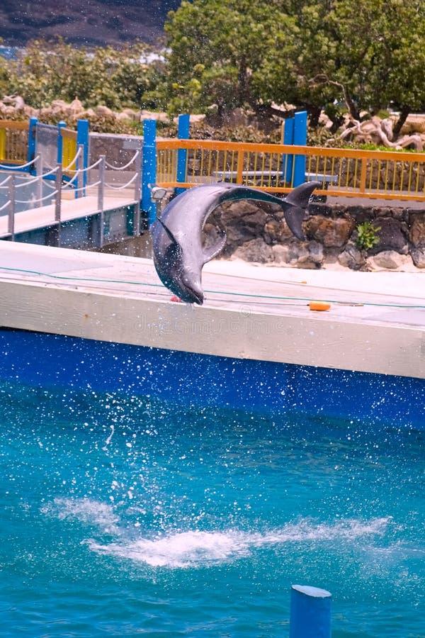 海豚轻碰 免版税库存照片