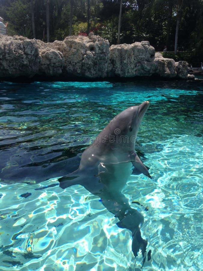 海豚飞跃 库存照片