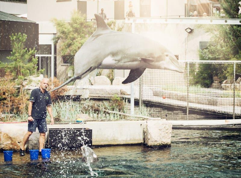 海豚` s由教练的指示跳出水 免版税库存照片