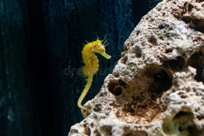 海象鱼的水下的特写镜头图片 免版税库存图片