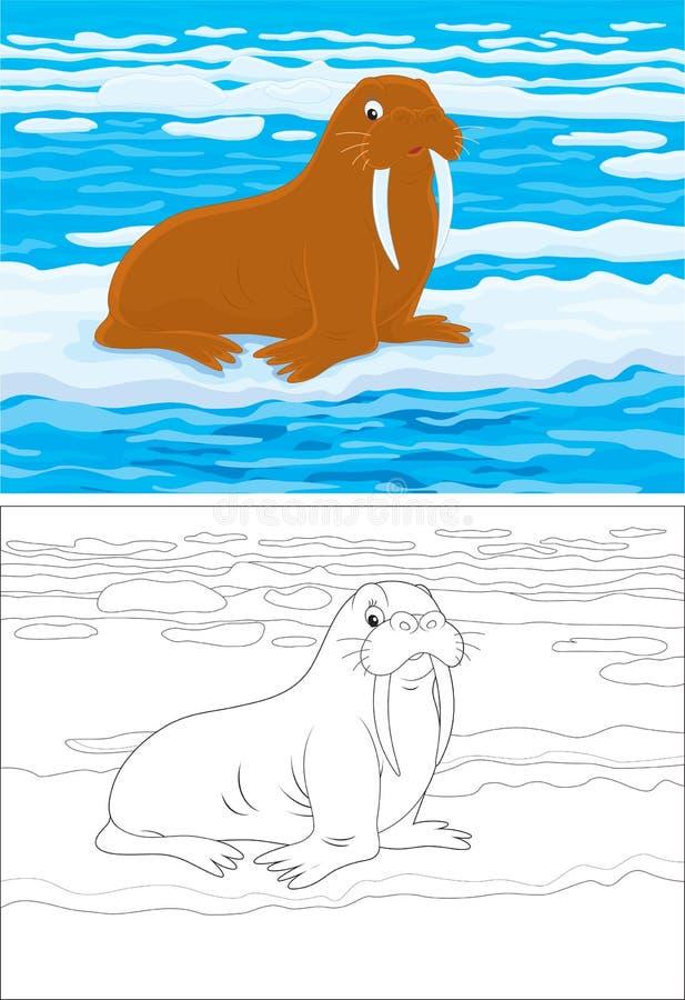 海象 向量例证