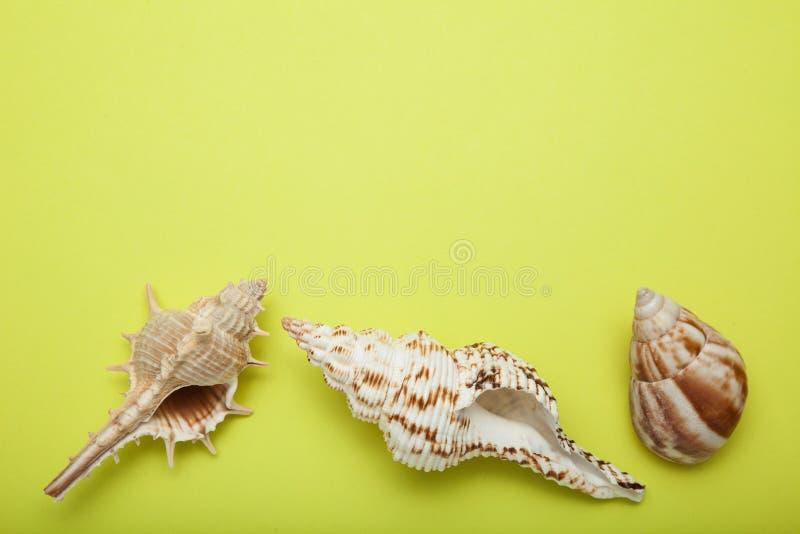 海贝类,文本的空的空间贝类在黄色背景的 库存照片