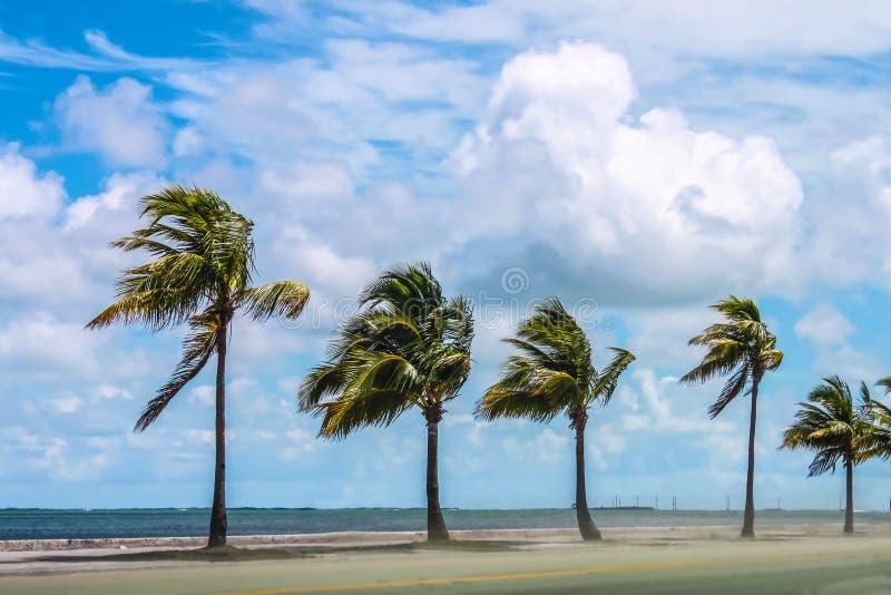 海路棕榈树成行,狂风狂沙,蓝天晴朗 免版税库存照片