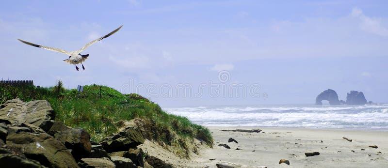 海边海鸥 免版税库存照片
