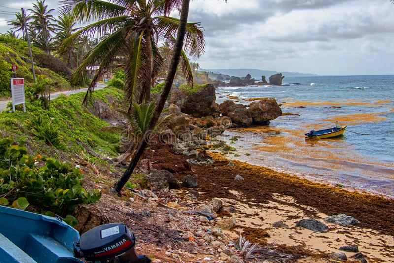 海边视图在巴巴多斯的东海岸风景的部分的马丁斯海湾 库存照片